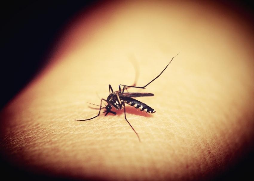 Creado en Israel: Una fábrica de mosquitos para luchar contra enfermedades como malaria o zika.
